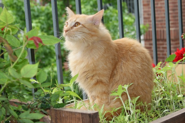 House Kitties need green space to