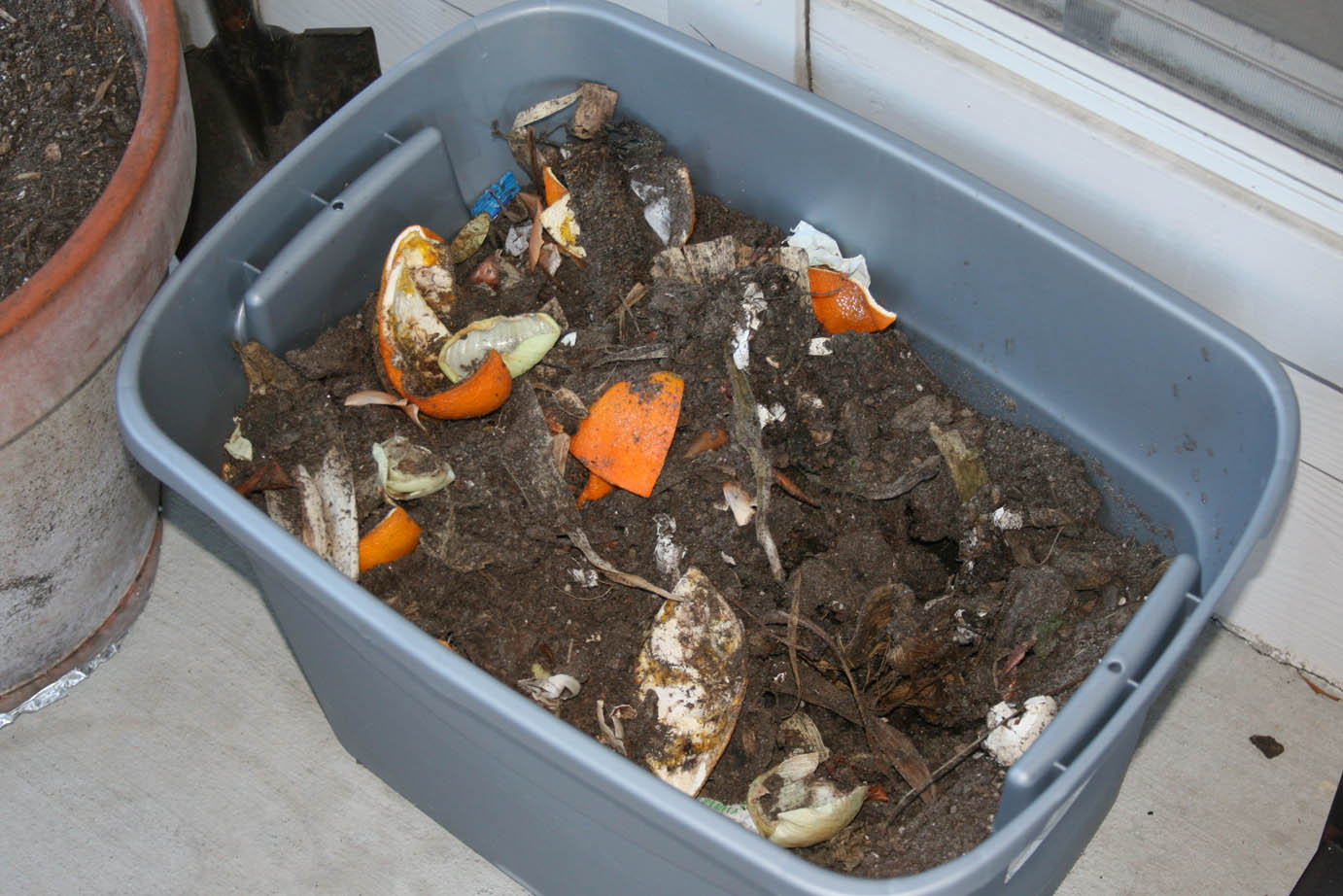 how to get rid of maggots in the compost bin